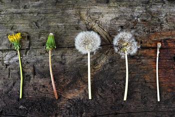 Cycle_de_vie_vegetal_smallCycle_de_vie_vegetal_small